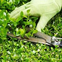 Garden Maintenance Reading